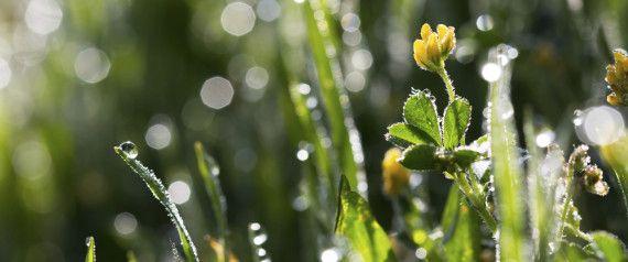 """Strom aus Pflanzen: Forscher entwickeln revolutionäre Methode für """"saubere"""" Energie"""