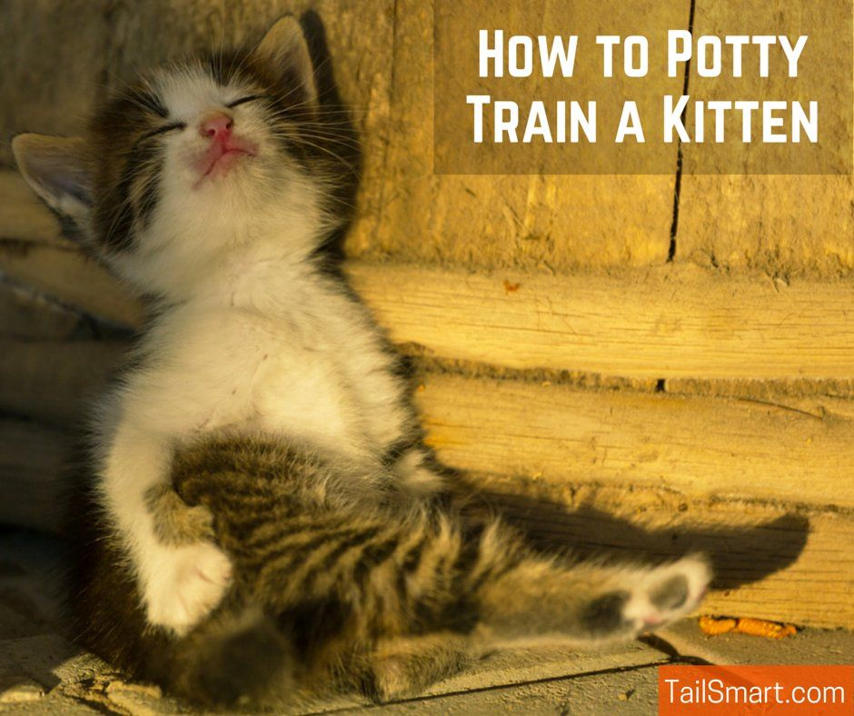 Cats Have A Strong Evolutionary Relationship With Their Bathroom Business You See Healthy Cats Use Their Waste As A Terri Training A Kitten Kitten Kitten Care