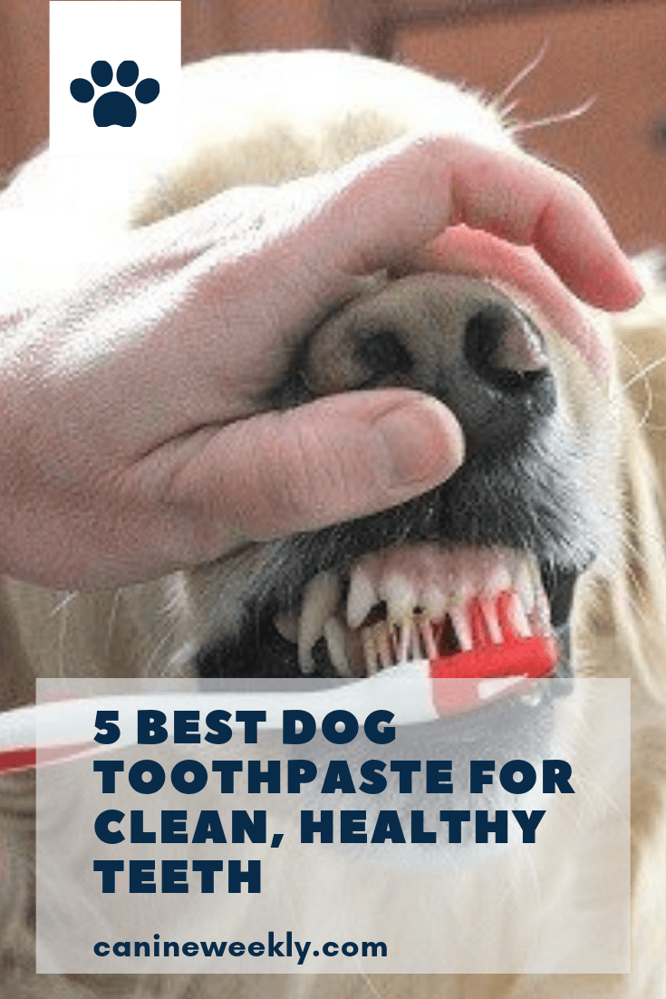 The First Step You Ll Need To Take In Your Quest To Keep Your Dog S Teeth Clean Is To Pick Out A Good Canine Toothp Dog Toothpaste Dog Teeth Cleaning Best Dogs