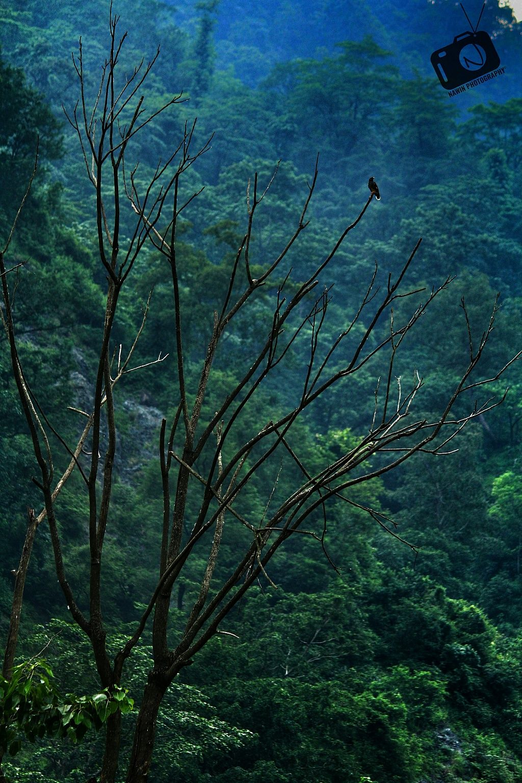 Silence Forest Tree Photography Naturephotography Naturelover Nature Photography Photography Amazing Photography