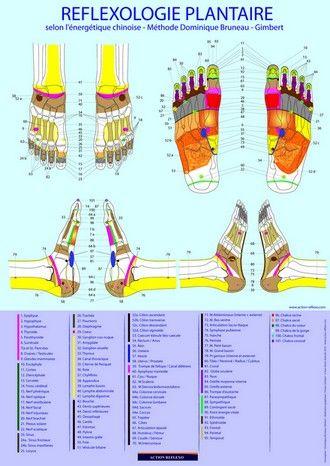 Turbo Pied gauche, dessus - zones réflexes et organes correspondants  OV89