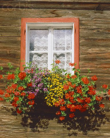 Window with blooming window box of a timber building