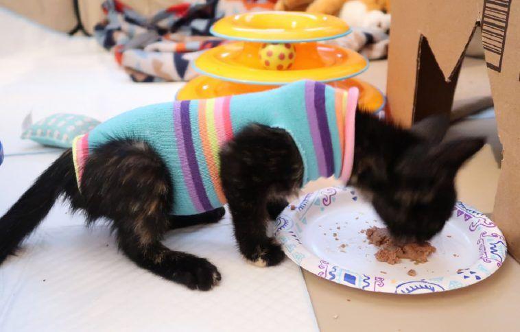 Kitten Sock Onesie Diy Craft For Your Furbabies After Spay Neuter Day Kitten Socks Onesie Diy Diy Kitten Clothes