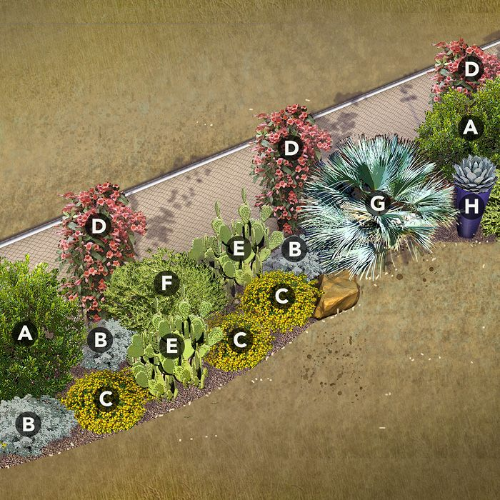 Disguise A Chain Link Fence With Landscaping. Four Garden Plans Offer  Solutions For Northwest, North Central, Southeast, And Desert Southwest  Yards.