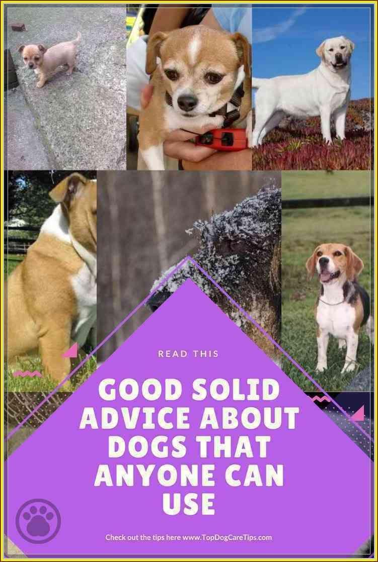 Dog Training Secrets – Man's Best Friend?