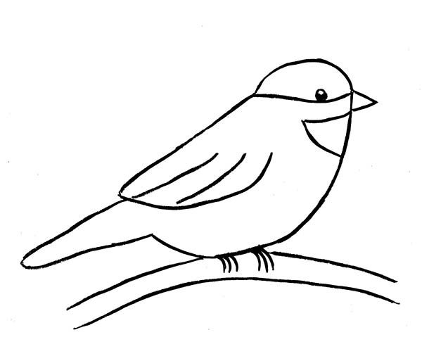 How To Draw A Chickadee Coloring Page Free Printable Coloring