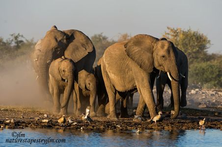 The Race To The Waterhole At Dusk !!!! by Judylynn Malloch