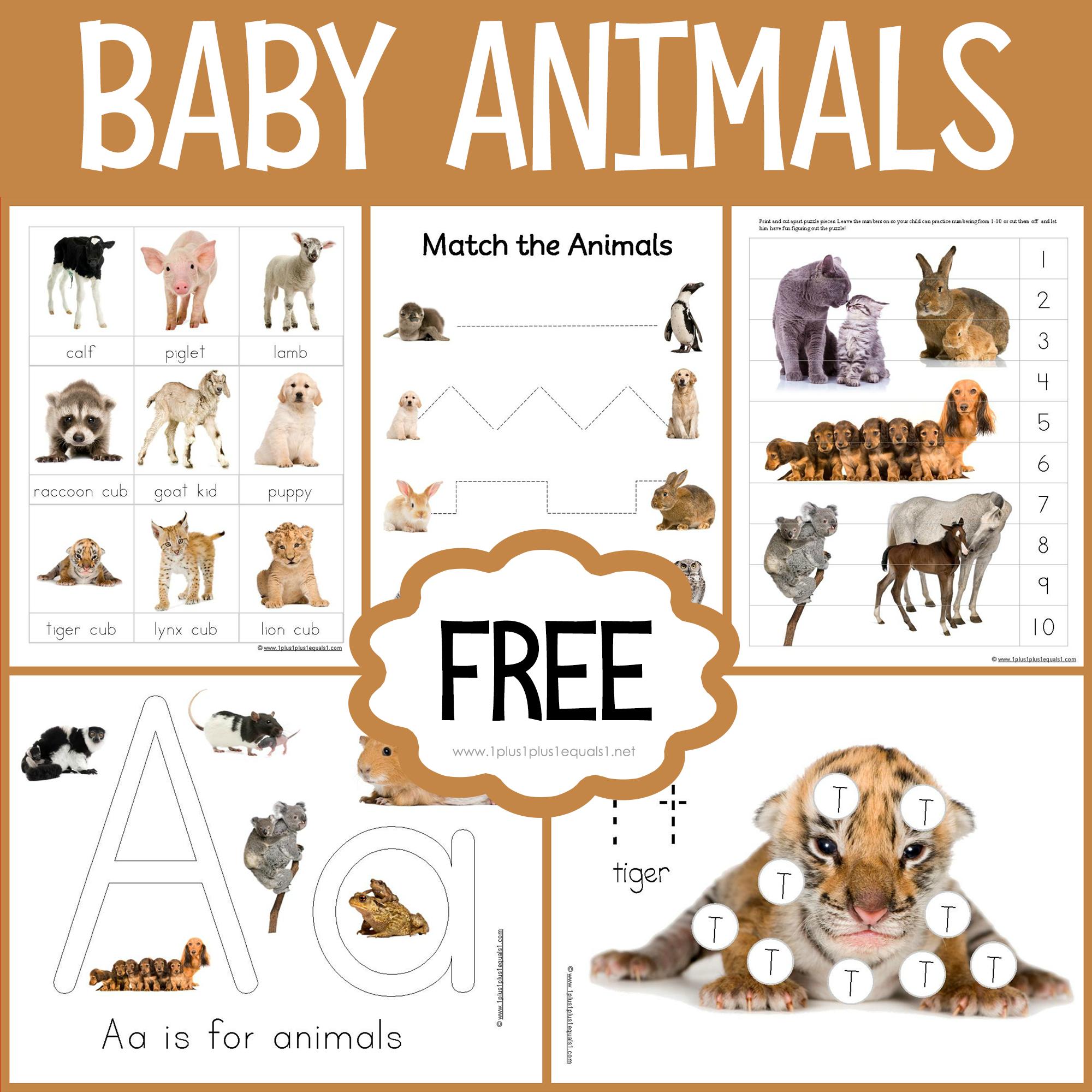 Baby Animals Printables Baby Animal Printables Baby Farm Animals Mother And Baby Animals [ 2000 x 2000 Pixel ]