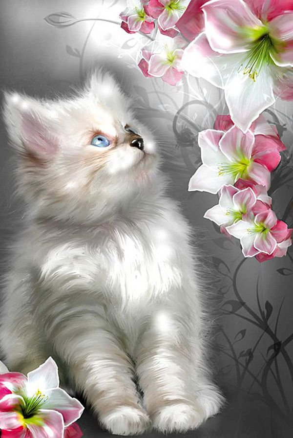 Даты открытки, анимация красивые картинки с котятами