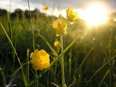 Herb Gardener's Thursday Odds and Ends 5/9/13