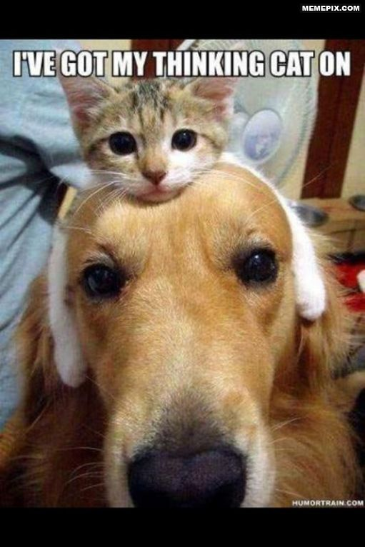 Thinking Cat Dogs Thinking Dog And Cat Cute Animals Funny