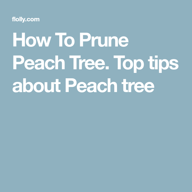 How To Prune Peach Tree. Top tips about Peach tree