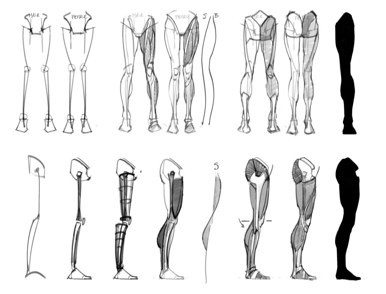 Drawing Help — art-res: anatoref: Masters of Anatomy I... | Creation ...