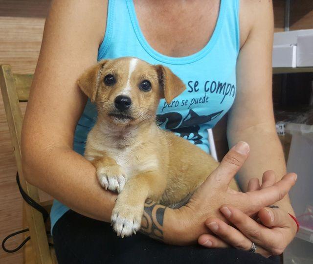Son4 Cachorritos Que Nos Dejaron Este Mes A Las Puertas Del Refugio Contactar Directamente Con La Protectora P Perros En Adopcion Adoptar Un Perro Perros
