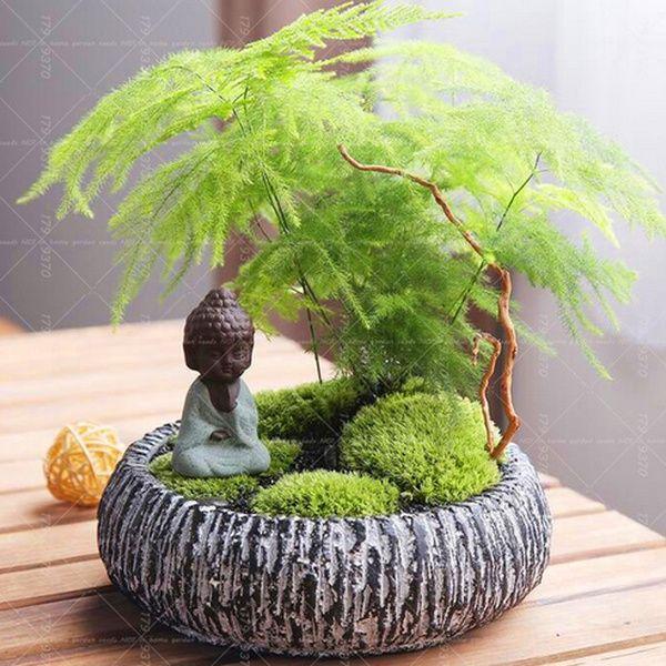 10PCS Asparagus Fern Seeds (Asparagus Setaceus)--Small Bamboo Bonsai Setose Asparagus Plants ,Clean the air potted   Wish