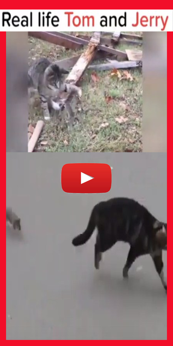 Funny cats afraid of mouse Funny cat videos, Funny cats