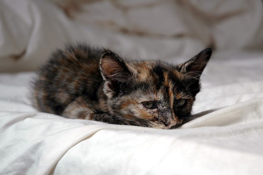 wake up, Maggie by 3thehardway.deviantart.com on @deviantART
