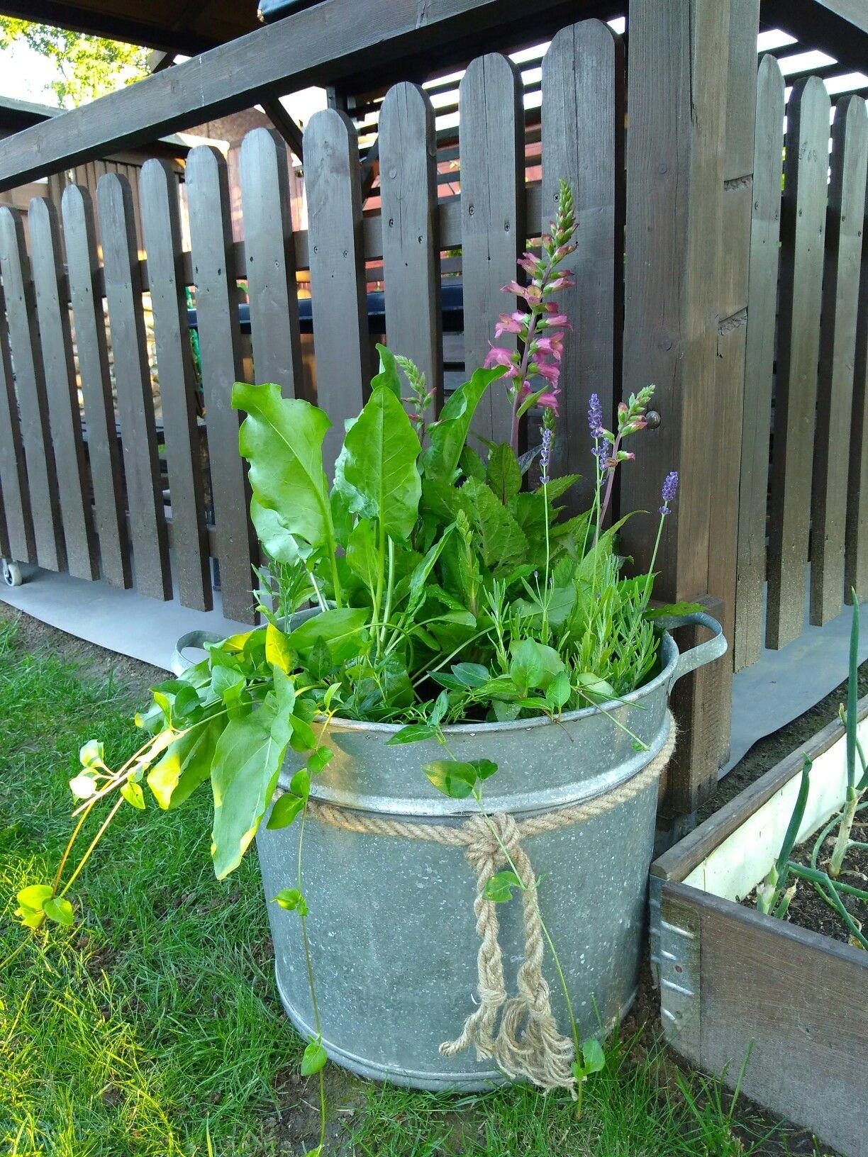 Pin By Bernadeta On Moje Pomysly Plants