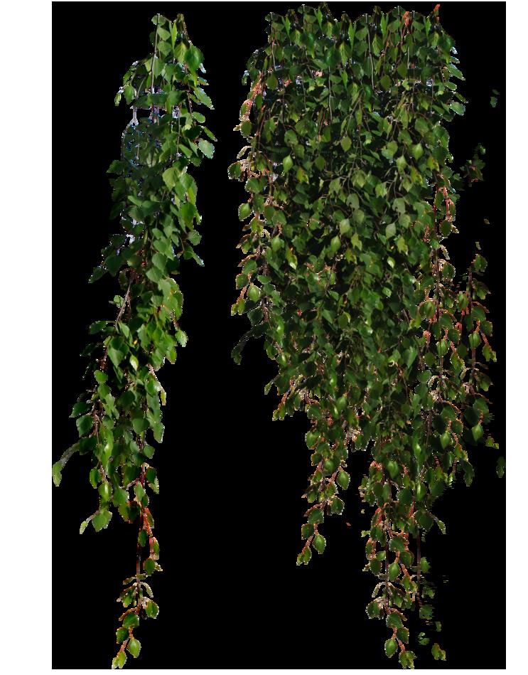 Hanging Indoor Plants Png