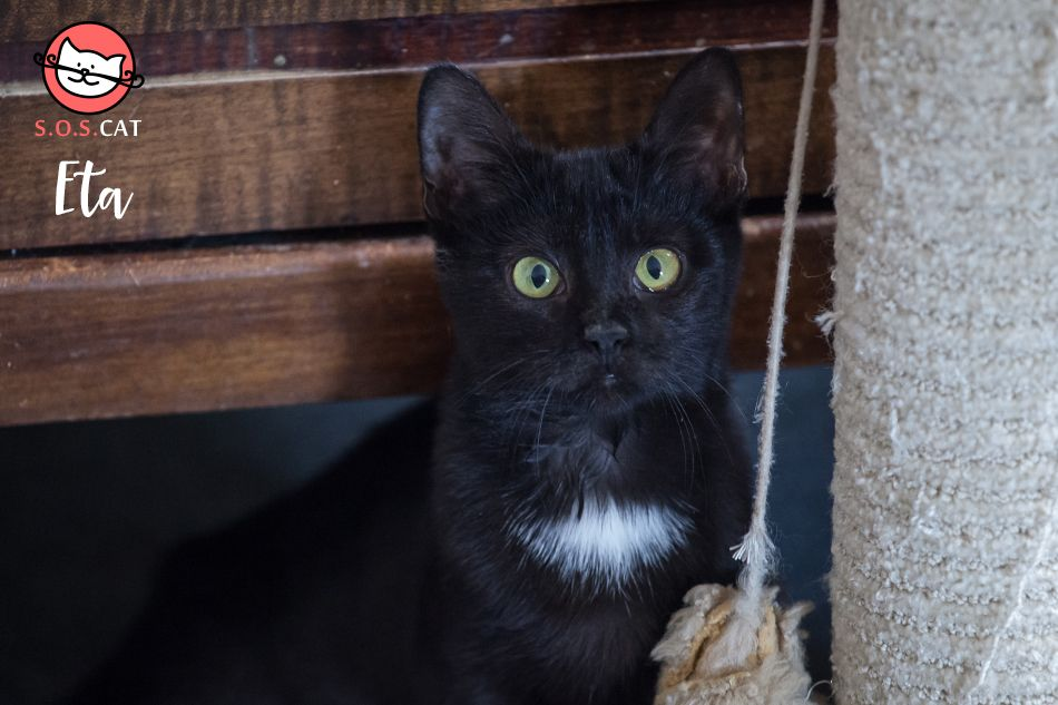 SOS Cat Rescue cats catlovers meow Cat rescue, Cats, Sos