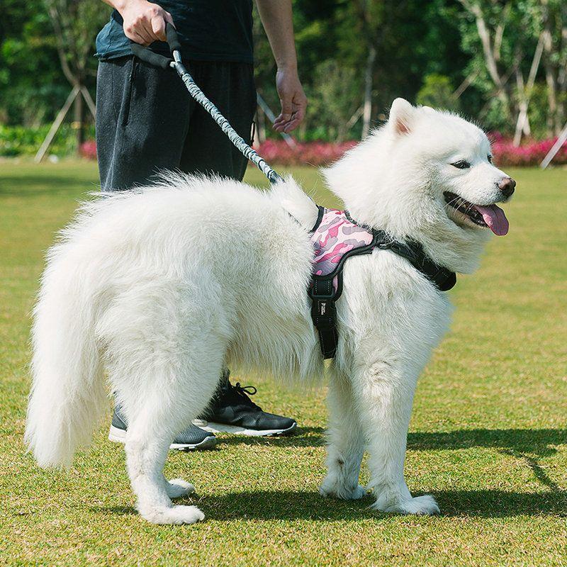 Hunde Geschirr Brustgeschirr Fur Haustier Animals Dogs Husky