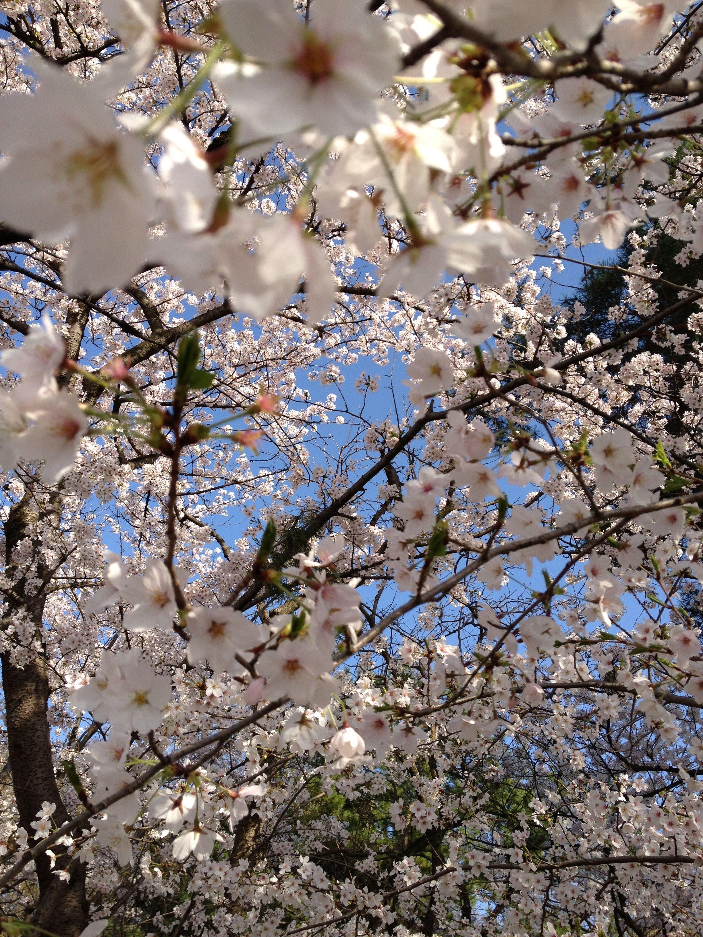 Spring   japan  2012
