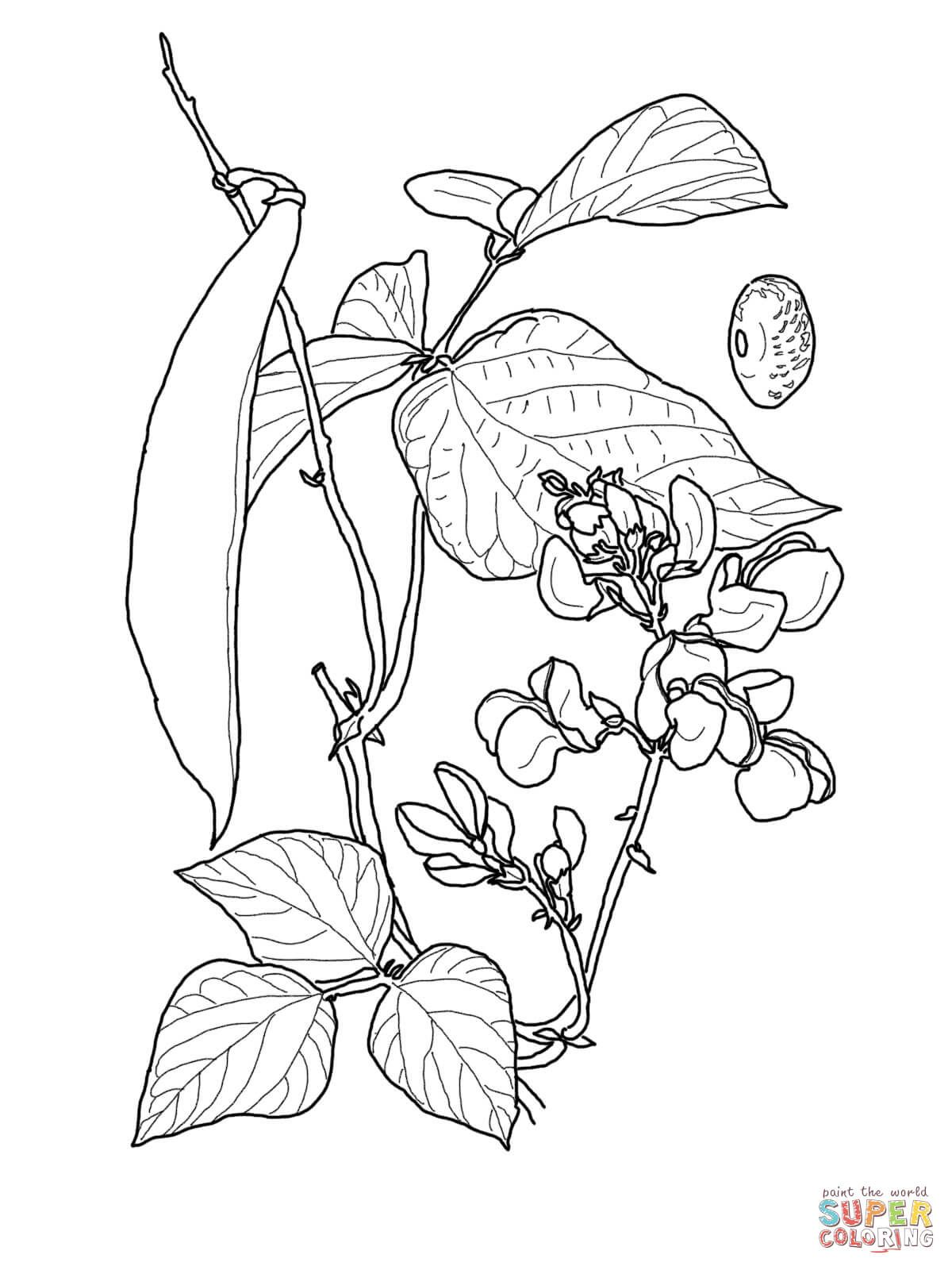 Runner Bean Super Coloring Tree Coloring Page Food Coloring