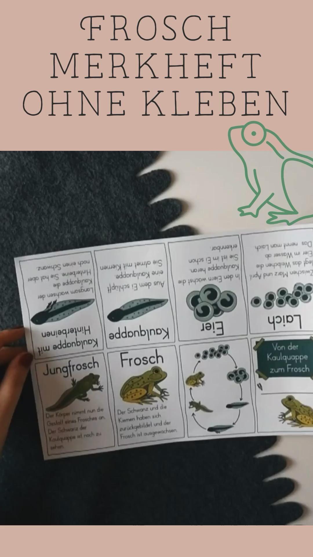 Lebenszyklus Frosch Merkheft zum Falten  Metamorphose   mit  Bastelanleitung – Unterrichtsmaterial im Fach Sachunterricht [Video]  [Video]   Naturwissenschaftsprojekte, Grundschule, Kunstunterricht