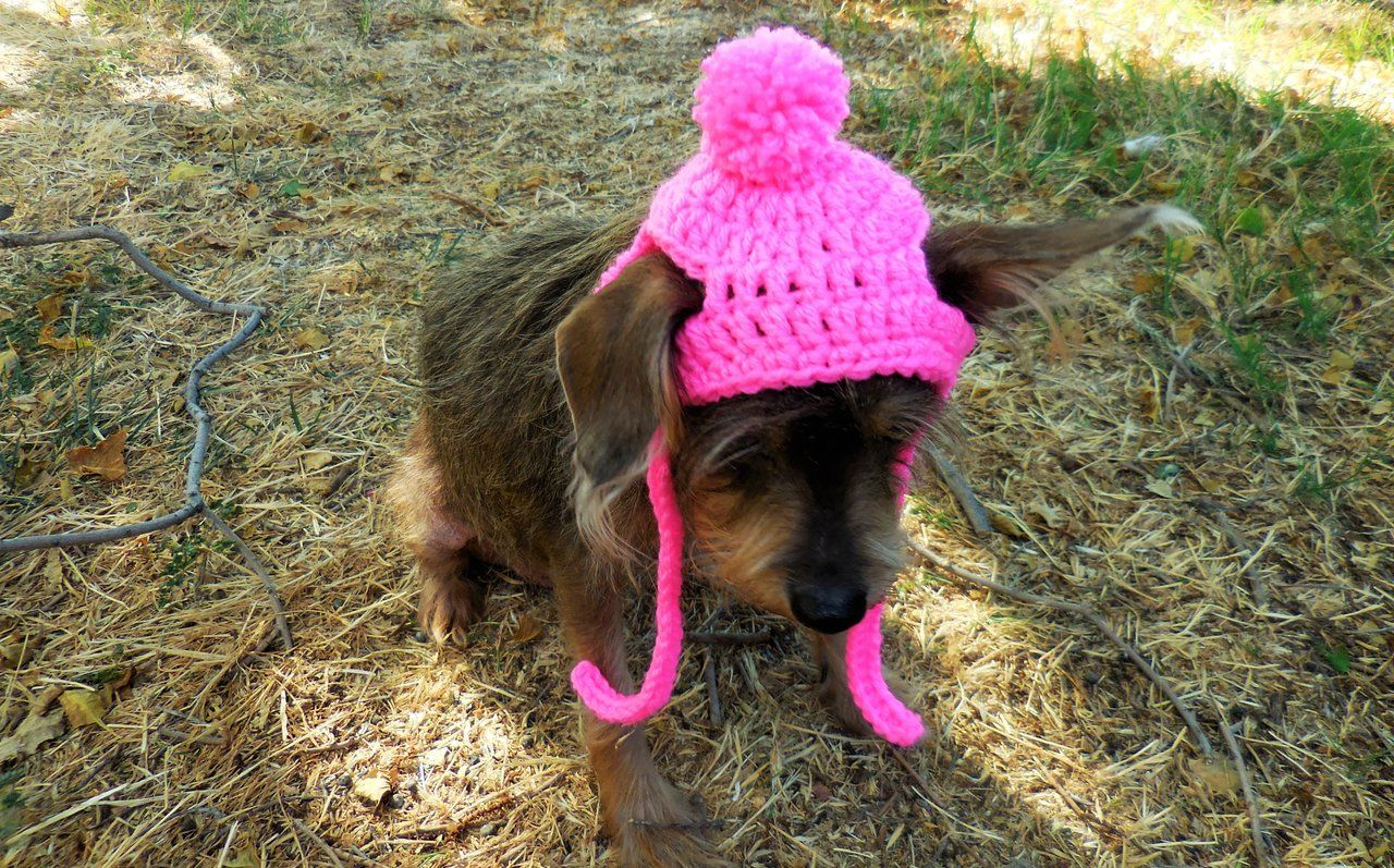 Small Dog/Cat Crochet Beanie Pattern #dogcrochetedsweaters