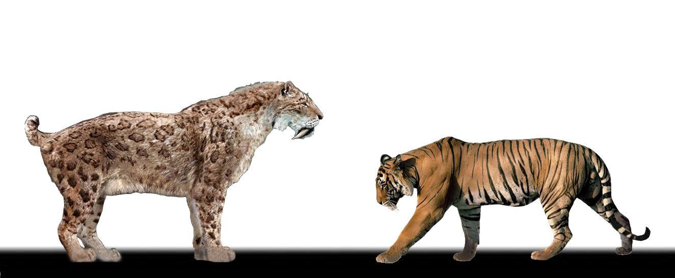 prehistoric bengal Buy mojo bengal tiger toy figure: collectible figurines - amazoncom  mojo  fun 387045 parasaurolophus - realistic prehistoric dinosaur toy replica.