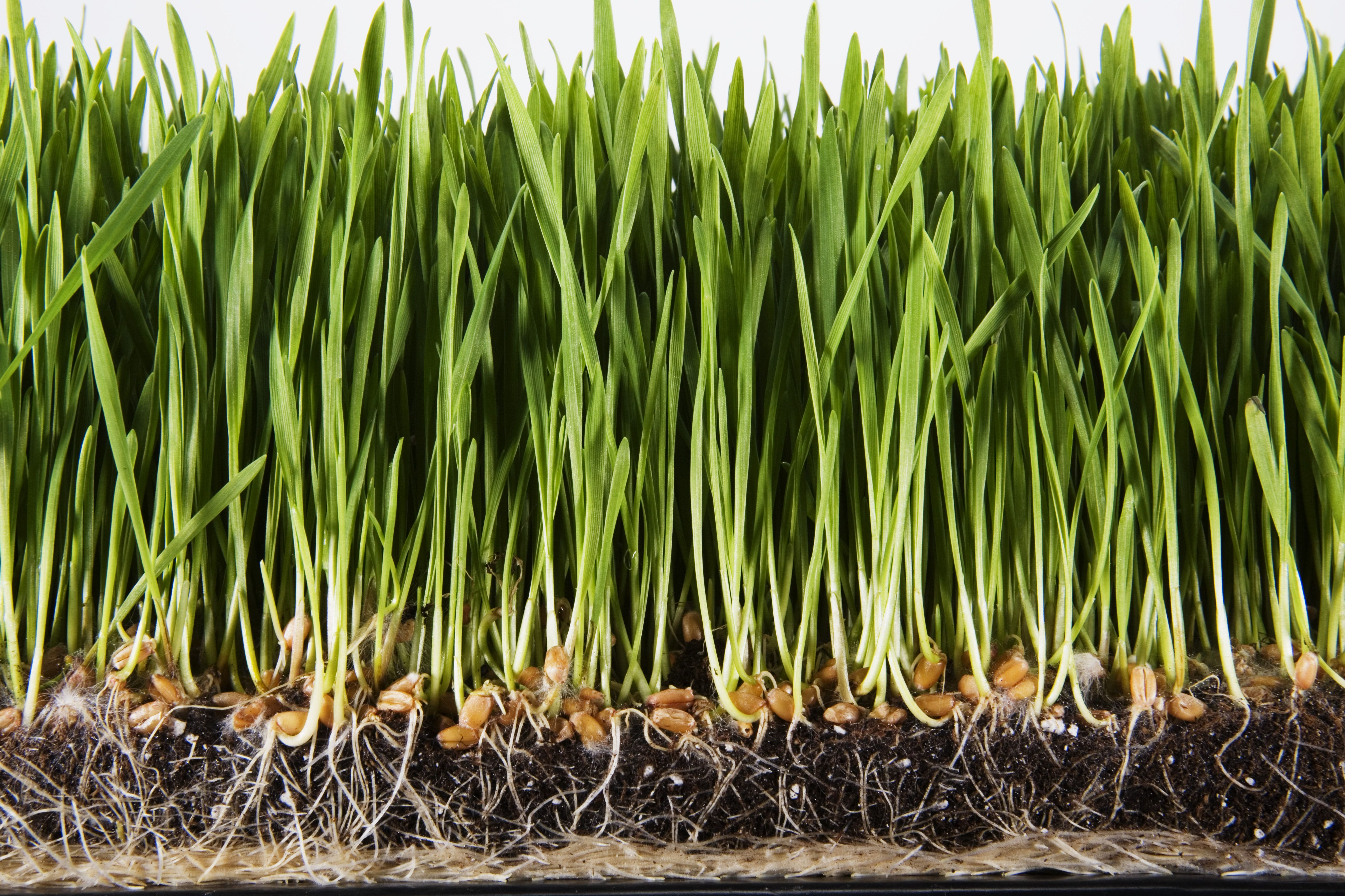 How To Choose The Best Grass Seed Best Grass Seed Lawn Garden Grass Seed