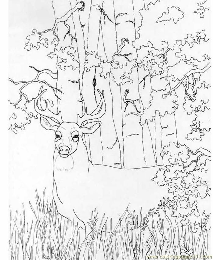 deer coloring pictures to print free printable coloring page whitetail deer mammals deer - Deer Coloring Pages