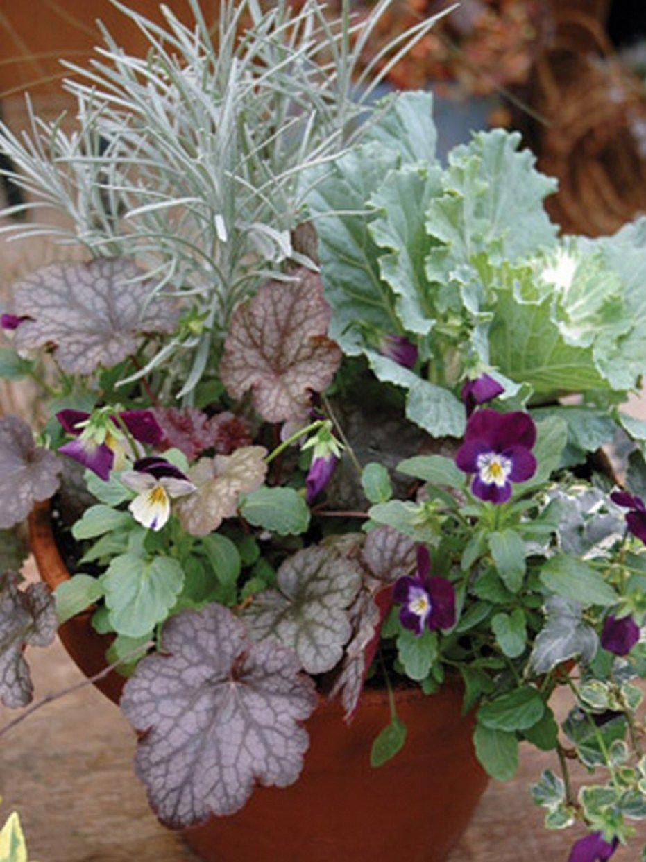 Beautiful outdoor winter container gardening design ideas