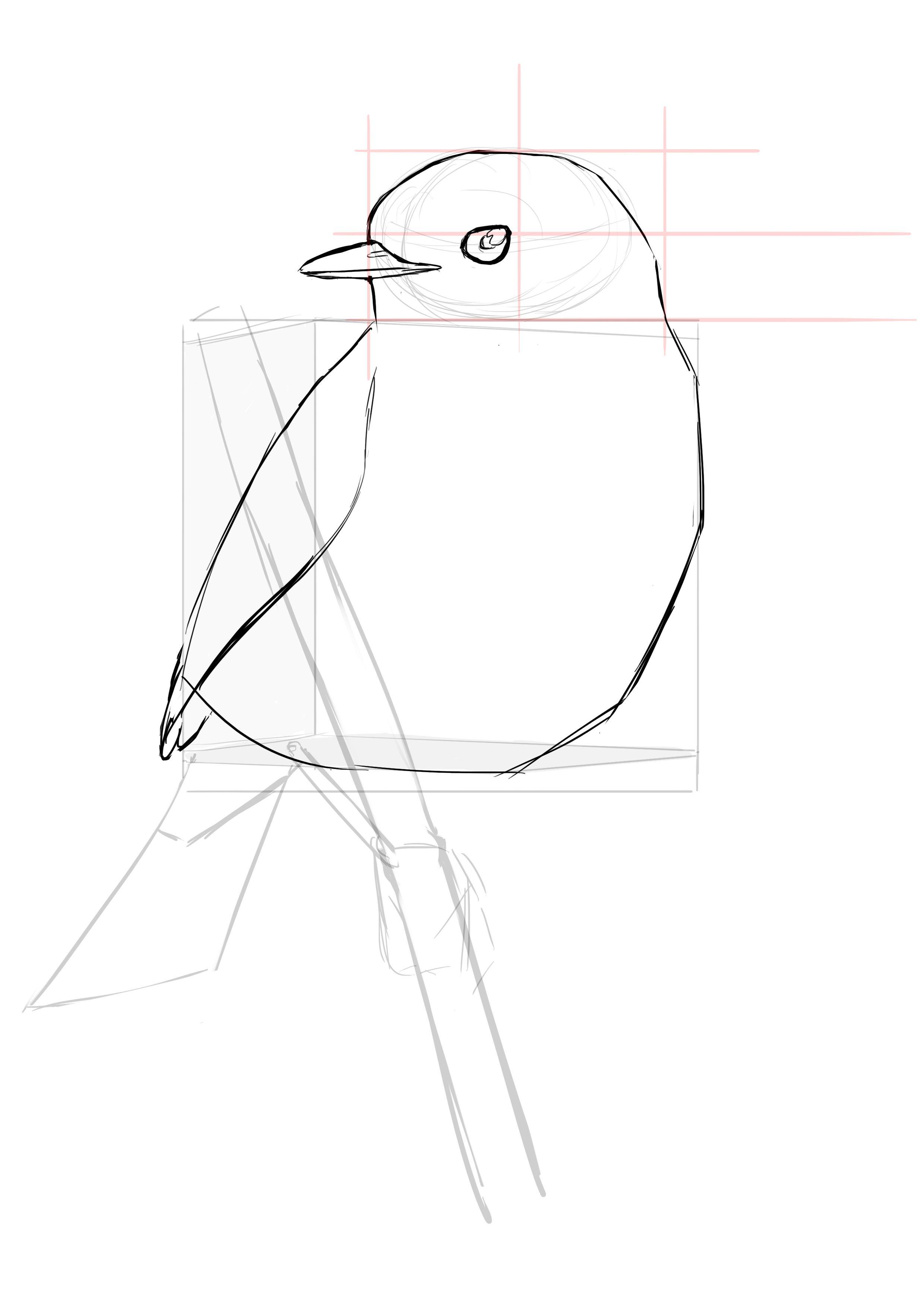 Comment Dessiner Un Oiseau Dessin Oiseau