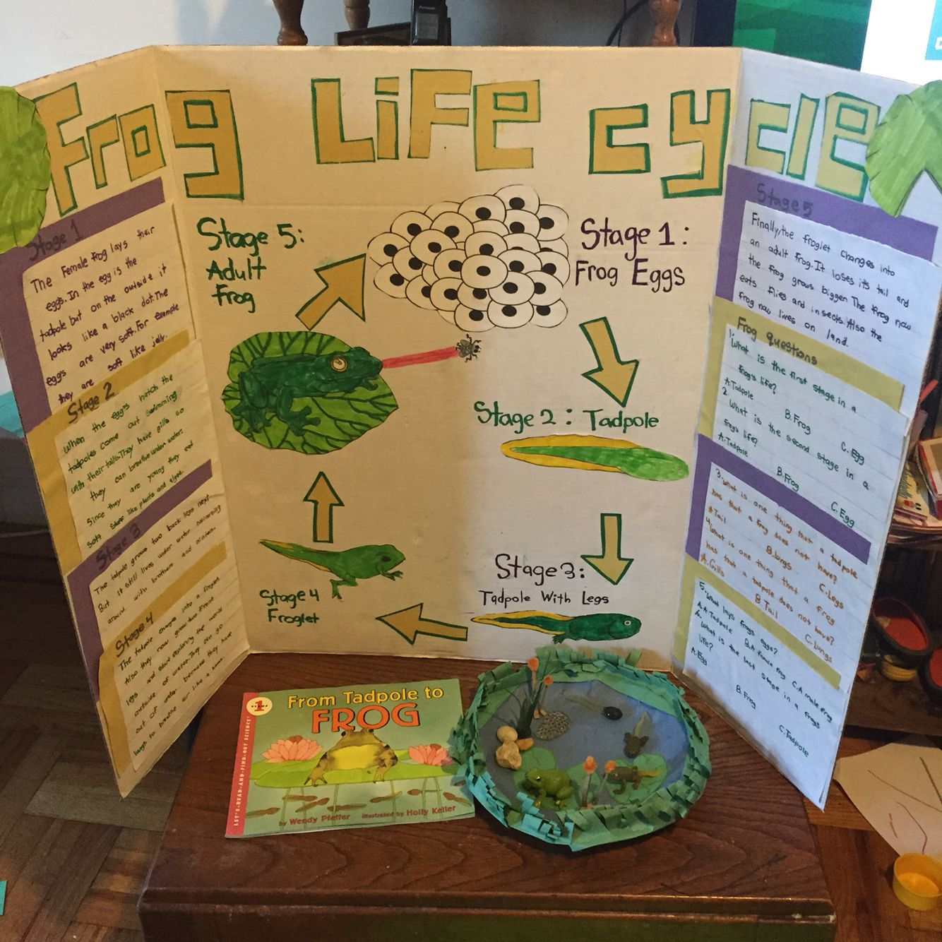 Second Grade Science Fair Project On The Life Cycle Of A