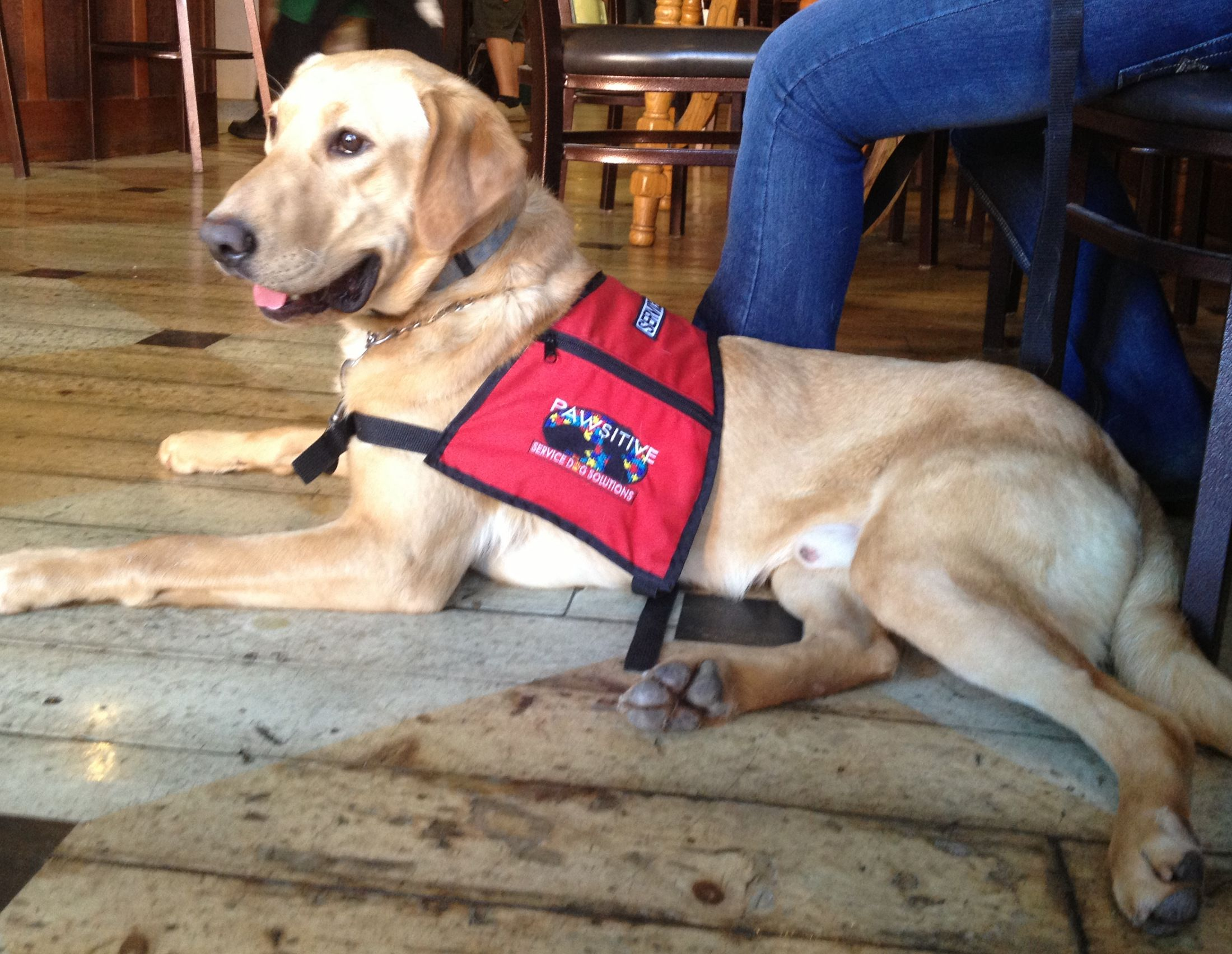 Autism Service Dogs, Seizure Alert Dogs, and Diabetic