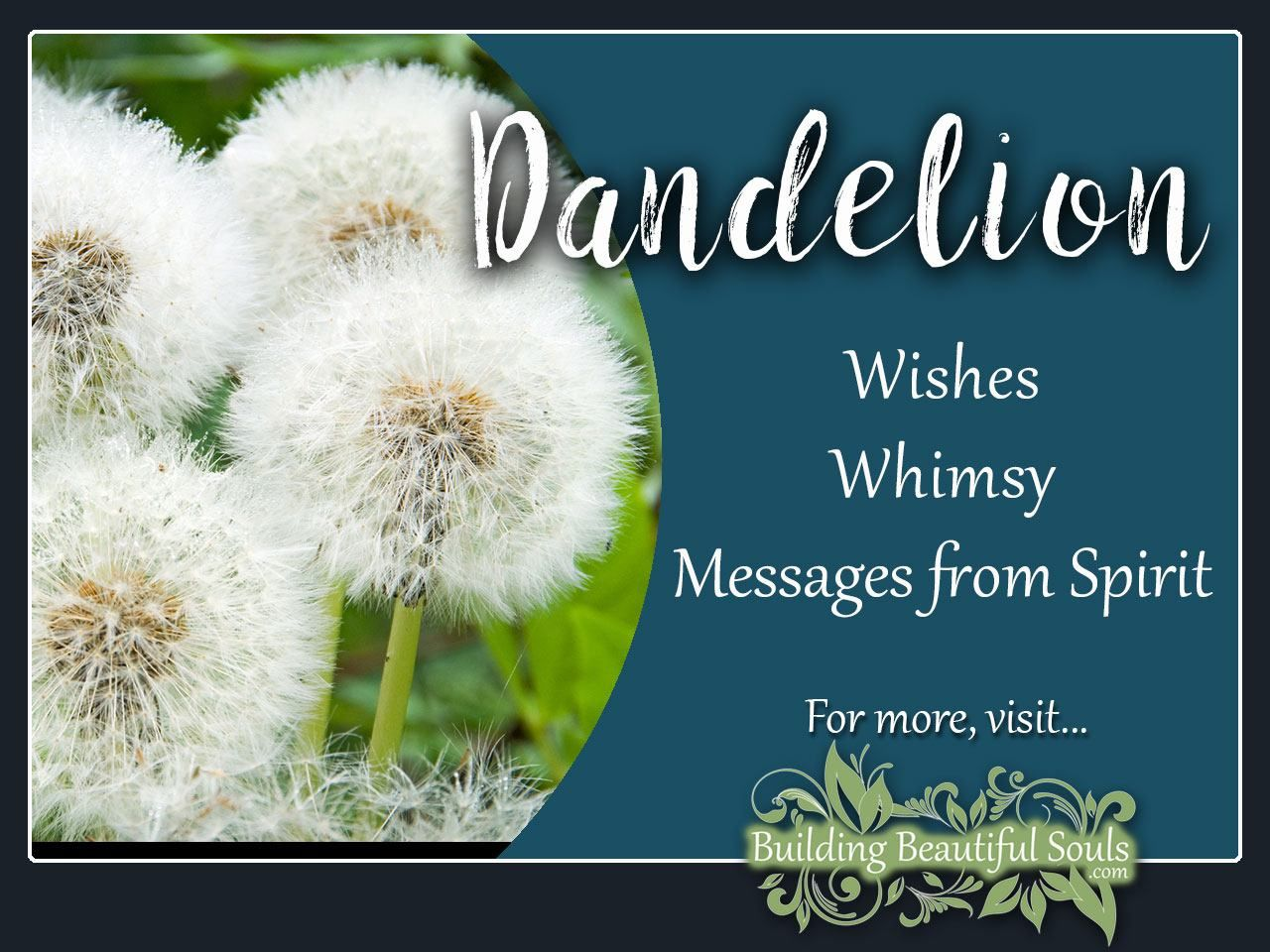 Dandelion Meaning Symbolism Flower Meanings Flower Meanings Dandelion Meaning Dandelion