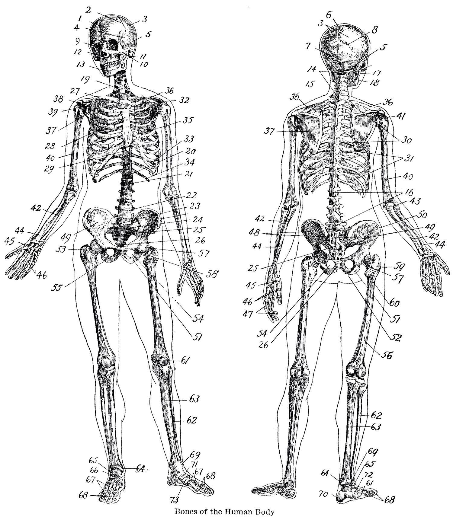 Halloween Decorations Diagrams Origami Diagram Skeleton Vintage Crafts Printable Ideas 1500x1713