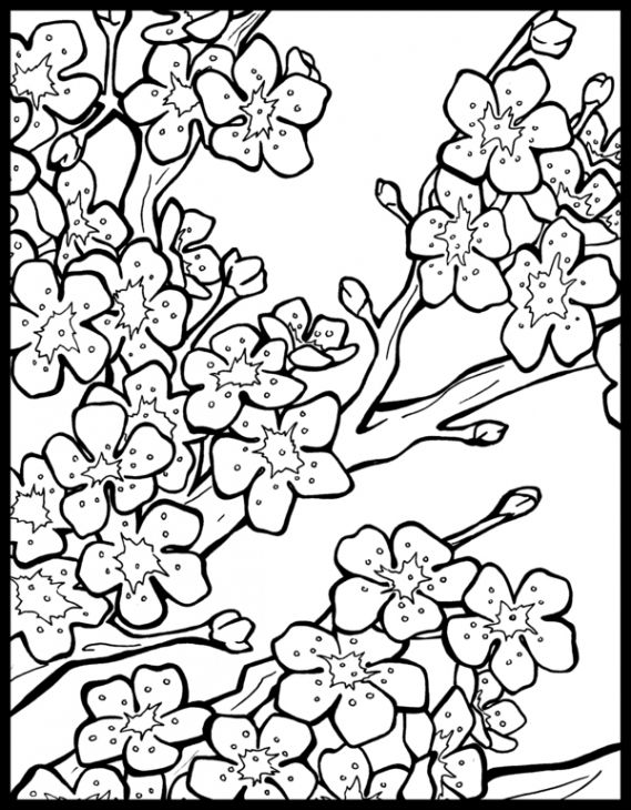 Free Cherry Blossom Coloring Page To Print Out Jpeg 569 730