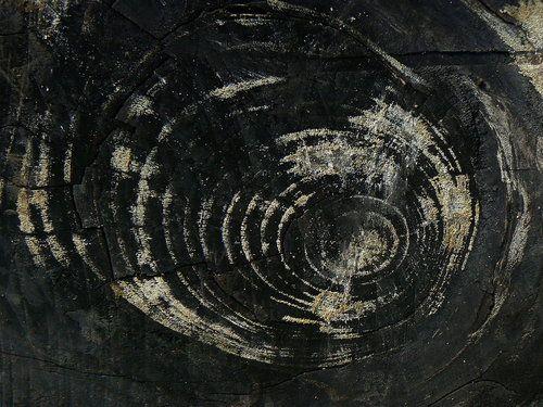 berndwuersching:  Burnt woodcatemate.deviantart.com