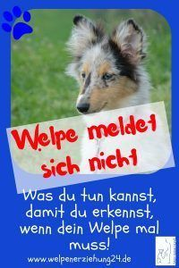 Puppy Does Not Answer If He Has To Blog Welpenerziehung Answer Blog Puppy Welpenerziehung Welpen Hundewelpen Erziehung Und Welpen Erziehen