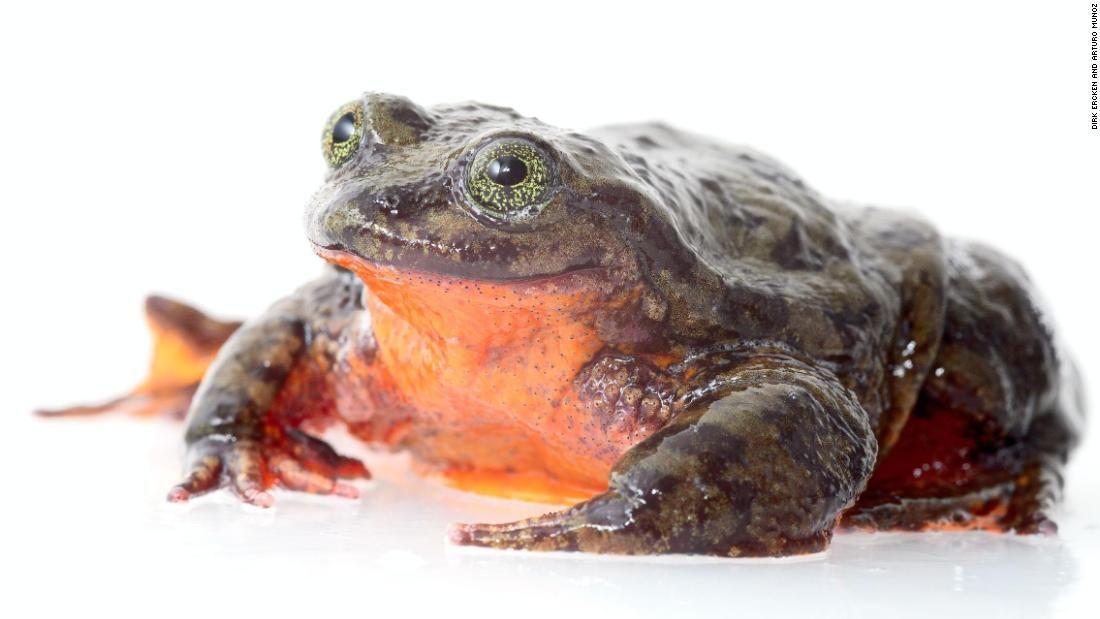 frog lake dating