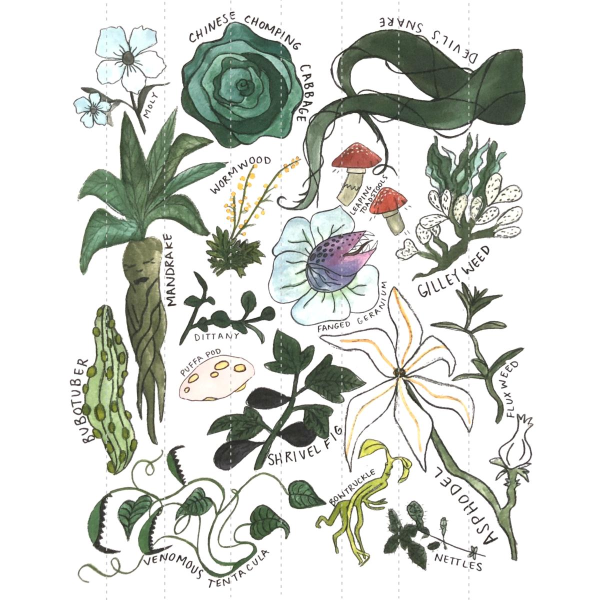 Magical Herbology Print Harry Potter Plants Harry Potter