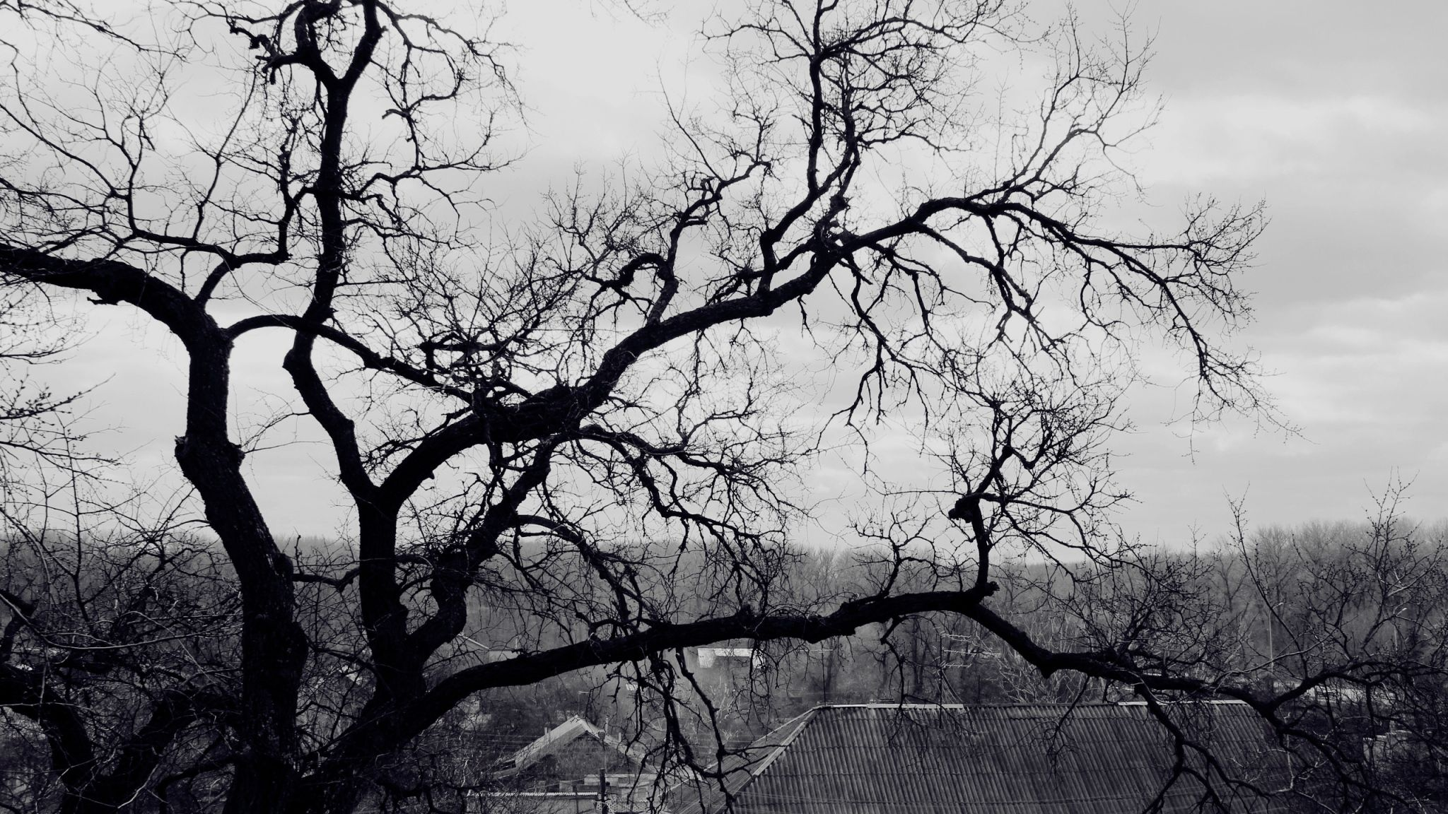 Download Wallpaper 2048x1152 Tree Branches Black And White