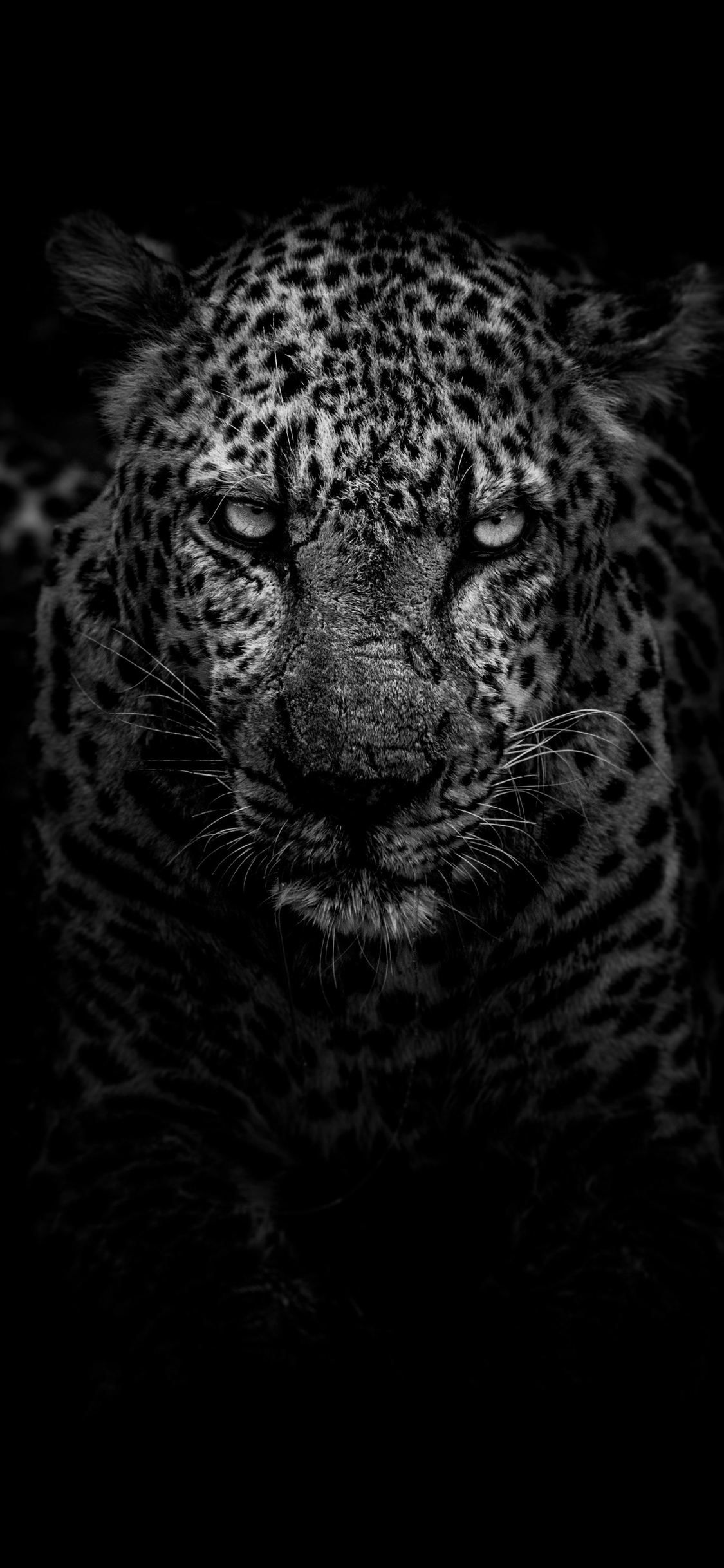 Leopard Dark Monochrome Iphone X Leopard Wallpaper Animal