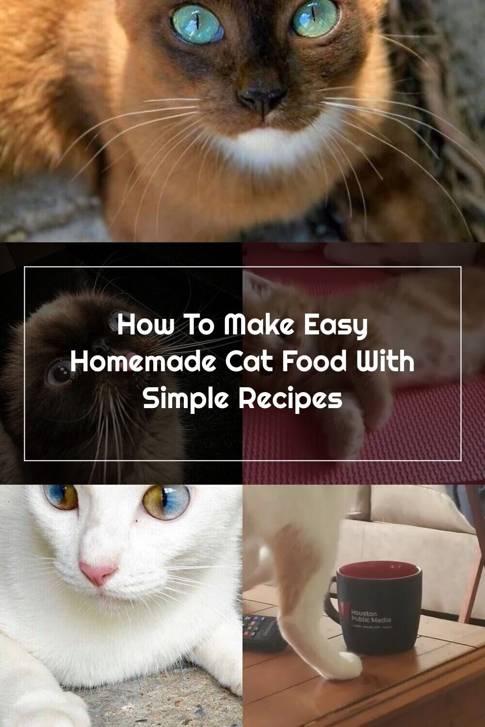 How To Make Easy Homemade Cat Food With Simple Recipes In 2020 Homemade Cat Food Homemade Cat Easy Homemade
