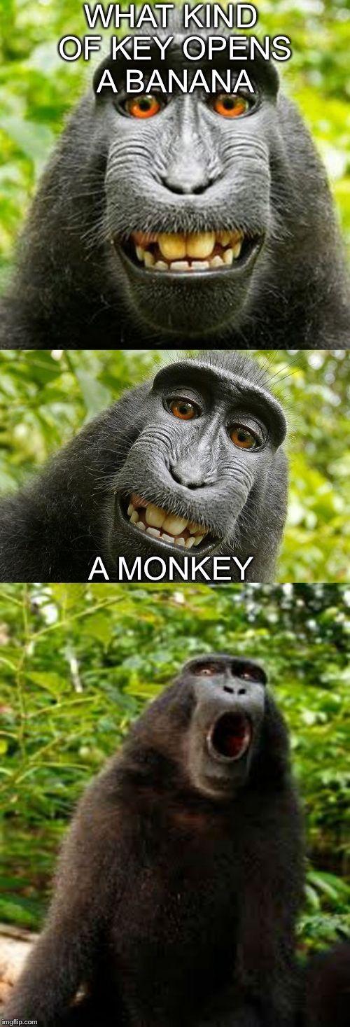 Bad Pun Monkey What Kind Of Key Opens A Banana A Monkey Image