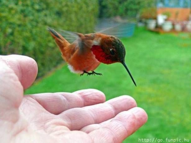 aww we love hummingbirds xxx