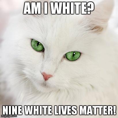 Woman Yelling At A Cat Cat Memes White Cat Meme Cats