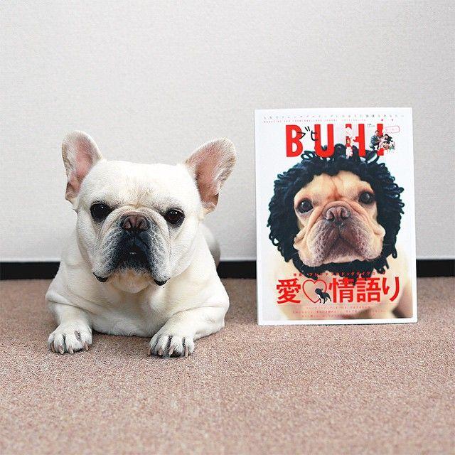 Bullo The Japanese French Bulldog French Bulldog Dog Day Afternoon Cute Animals